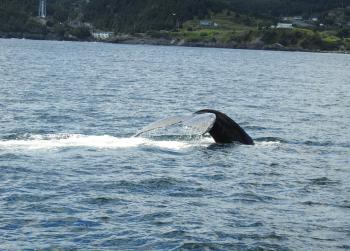 And 2 more Humpback Whales!
