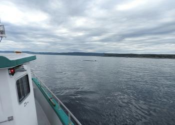 And a Fin Whale just passed us