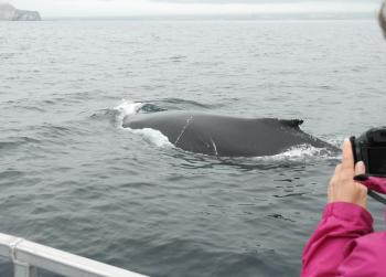 Close Humpback Whales again this morning!