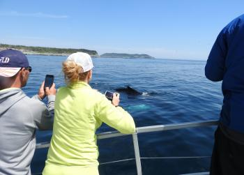 Close encounter of the Humpback Whale again!