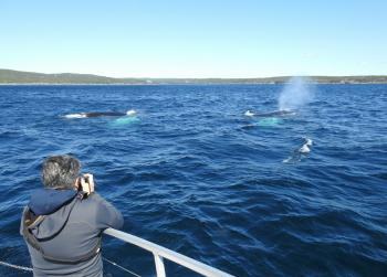 Close encounter with 3 massive Humpback Whales this morning!