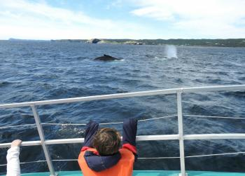 Close up with 2 friendly Humpback Whales his morning!