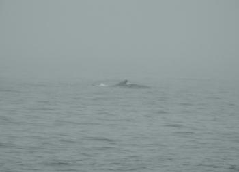 Humpback Whale on this tour!