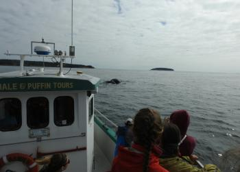 Humpback Whale overload for the beginning of this tour, at least 20 feeding in the bay!