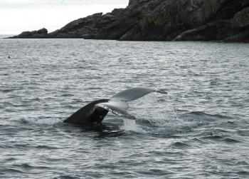 Humpback Whales are back this morning!