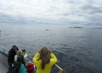 Humpback Whales are still around