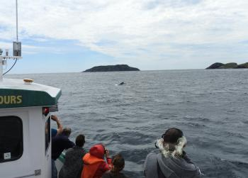 Humpback Whales are still with us!