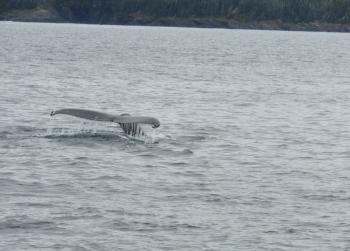 Just met a Humpback Whale!