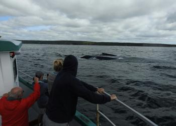 Looks like another day full of friendly Humpback Whales!