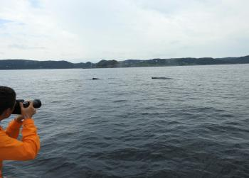 Many Humpback Whales and Minke Whales are out here today!
