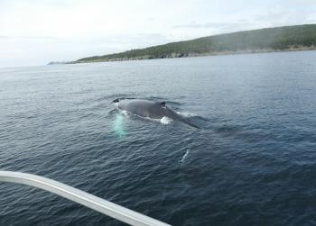 Our closest Humpback Whale friends are still here!