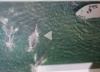 Sneak peek of the amazing Humpback Whale  drone footage from our last tour!