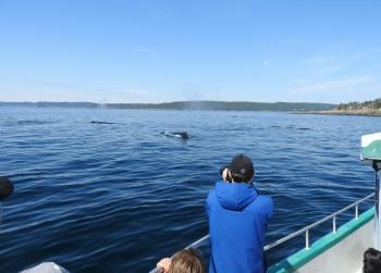 Surrounded by Humpback Whales again today!