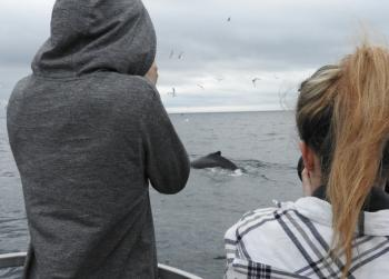 The Humpback Whales are out there again!