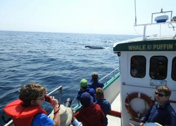 The Humpback Whales are with us again this morning!