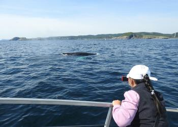 They did not lie. HUMPBACK WHALES galore out here now and FIN WHALES and MINKE WHALES and Puffins! And it's warm and calm out here!