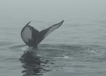 We already met 4 friendly Humpback Whales on this tour!