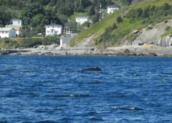 We just spotted a Humpback Whale