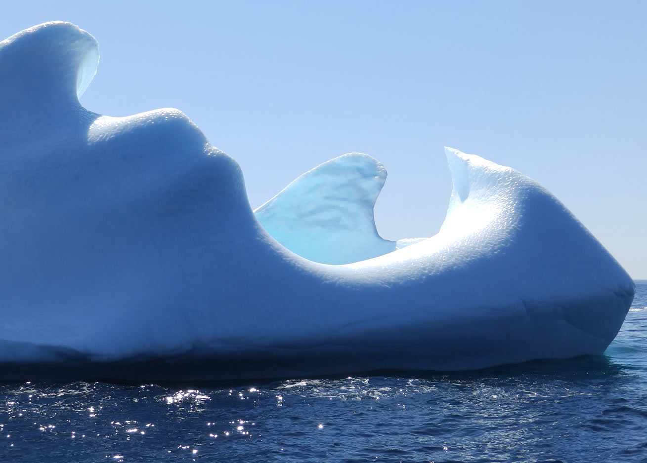 Iceberg And Whale Tours