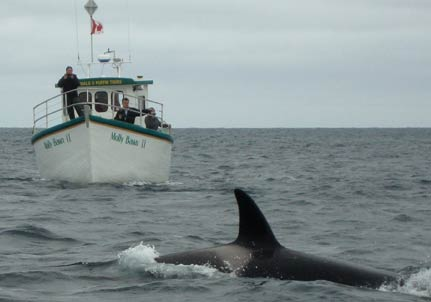 Newfoundland Whale Watching